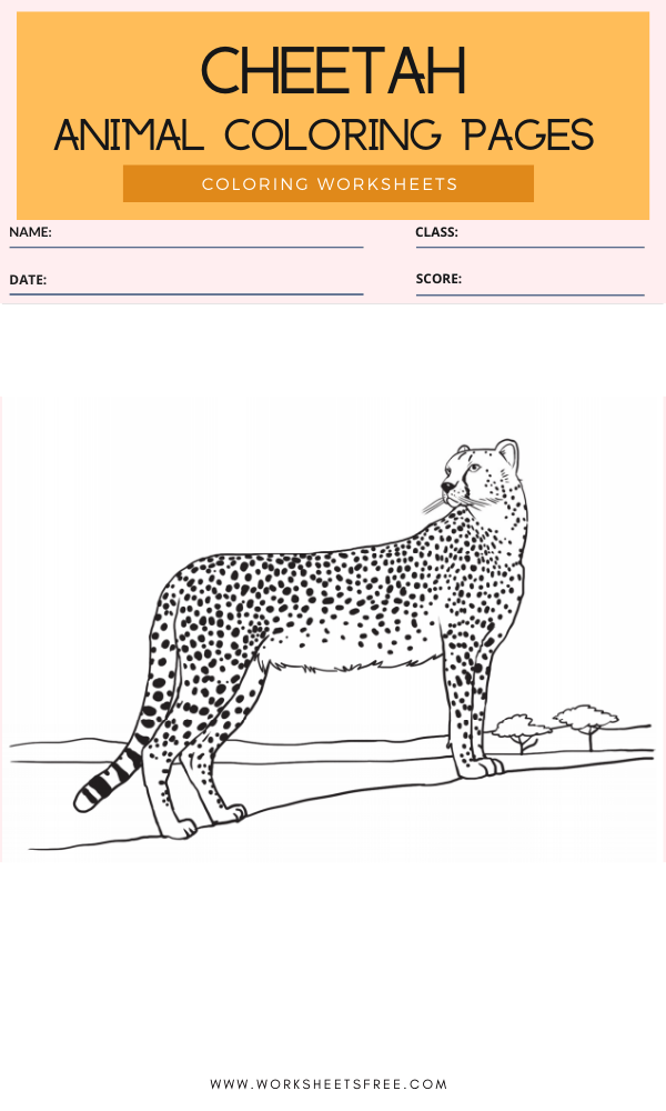 Cheetah Coloring Page - Animal Coloring Pages Worksheets