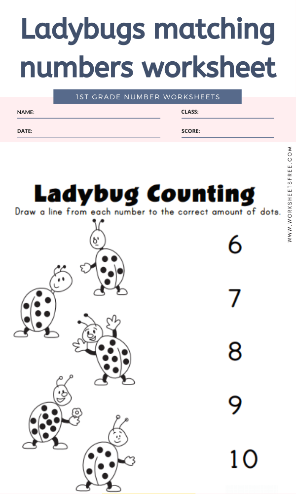 Ladybugs matching numbers worksheet