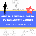 Printable Anatomy Labeling Worksheets With Answers