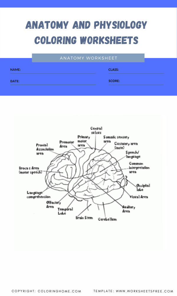 anatomy and physiology coloring worksheets 3