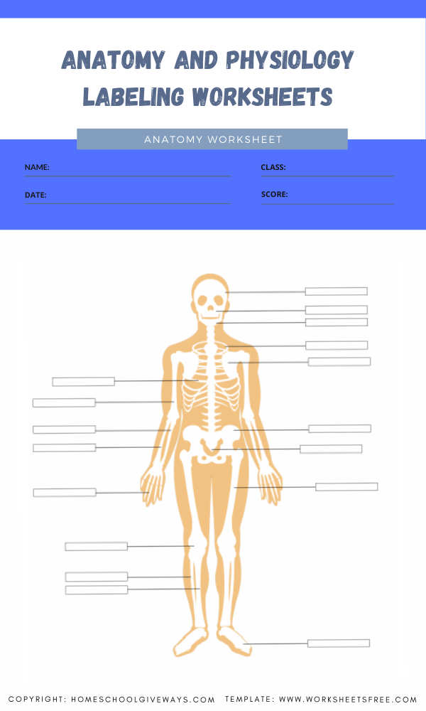 anatomy and physiology labeling worksheets 10