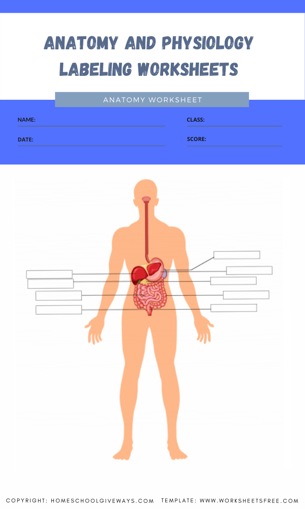 anatomy and physiology labeling worksheets 2