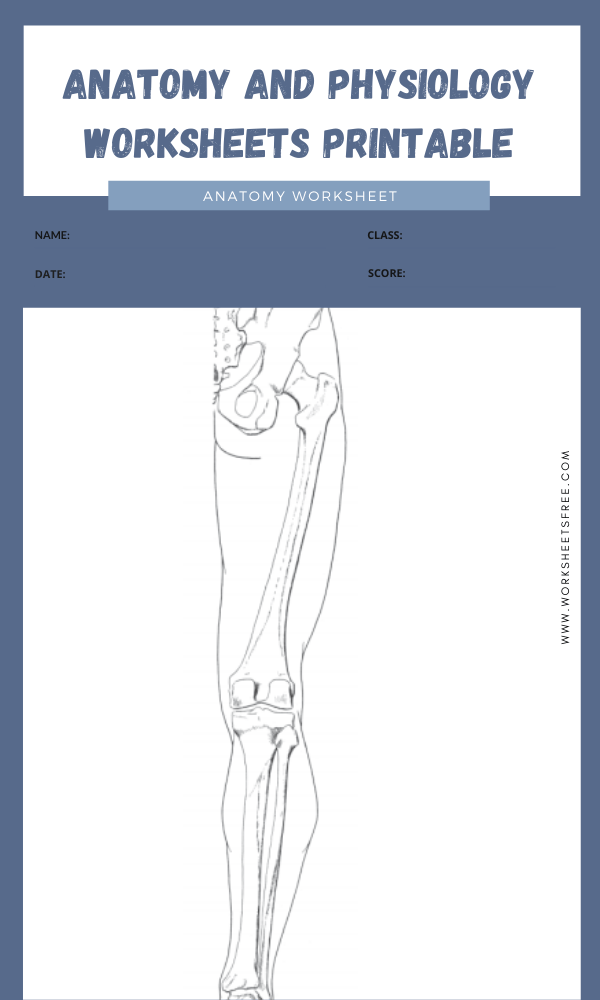 anatomy and physiology worksheets printable 10