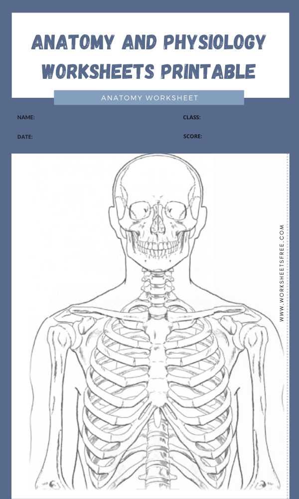 anatomy and physiology worksheets printable 5