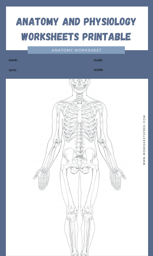 anatomy and physiology worksheets printable 6