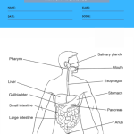 anatomy coloring worksheets 5