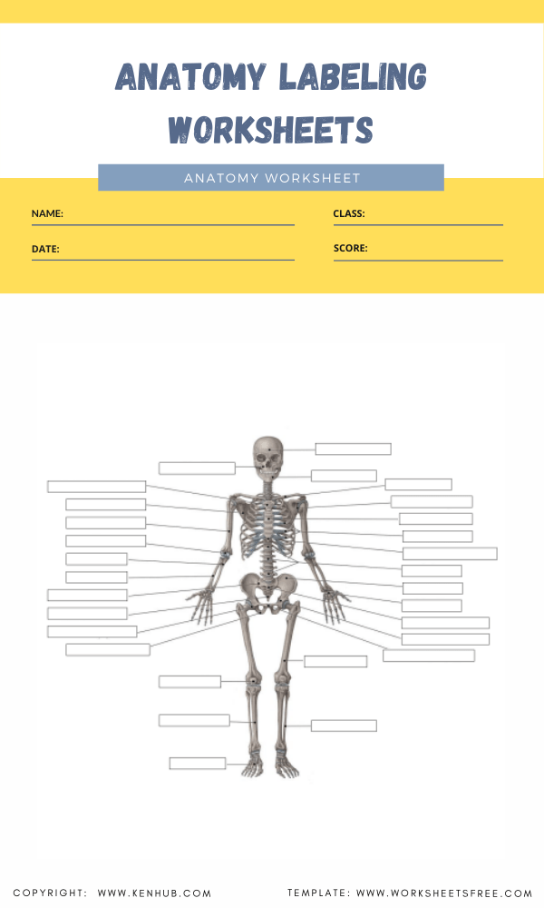 anatomy labeling worksheets 3