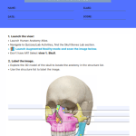 anatomy worksheets college 4