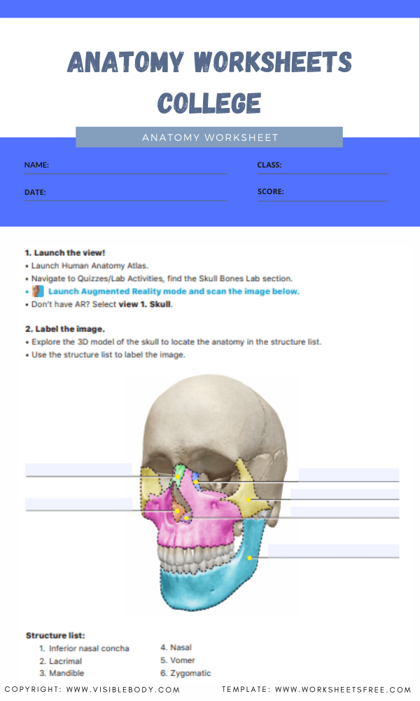 anatomy worksheets college 4