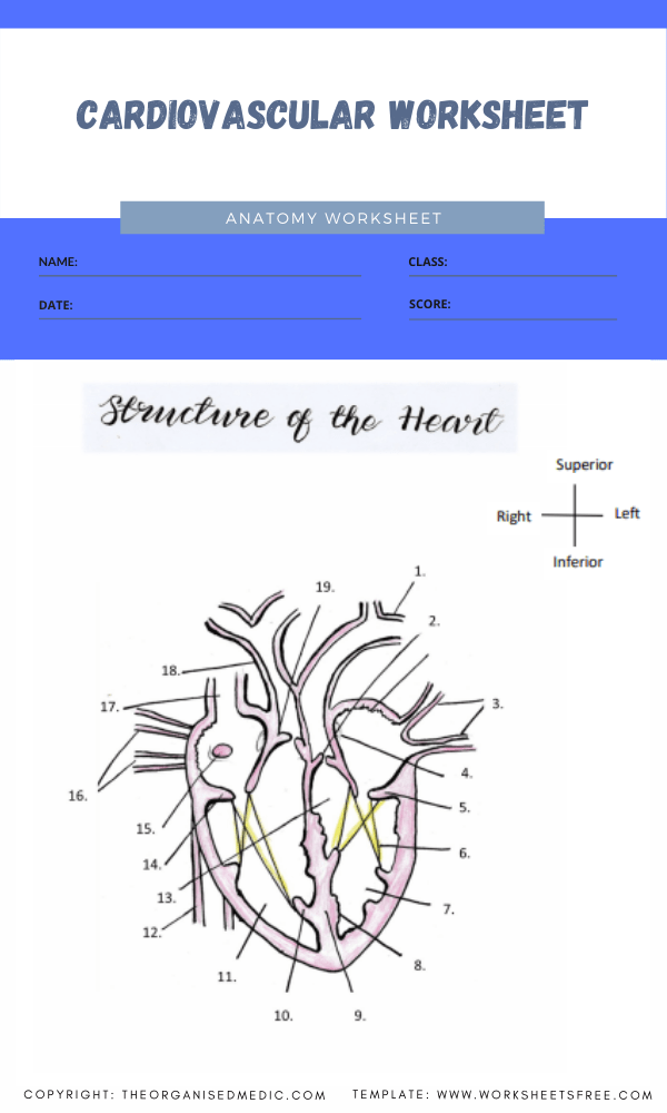 anatomy worksheets for medical students 1