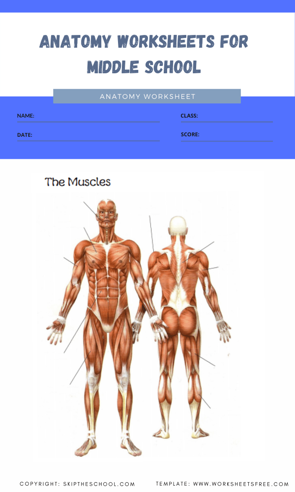anatomy worksheets for middle school 3