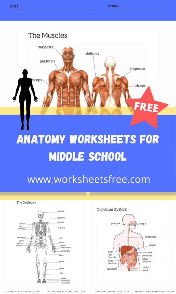 anatomy worksheets for middle school