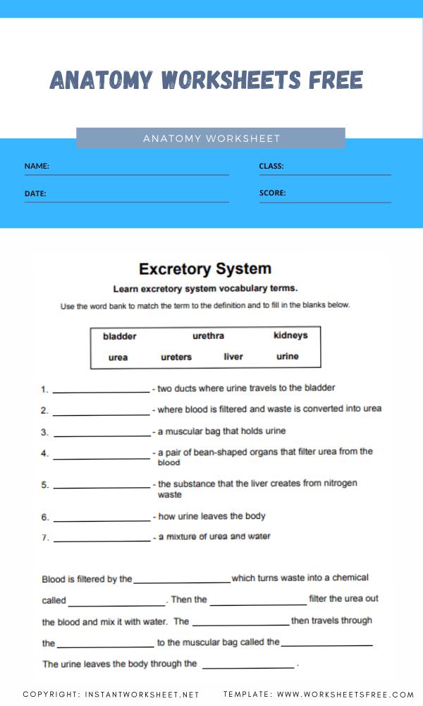 anatomy worksheets free 1