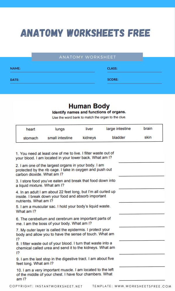 anatomy worksheets free 2