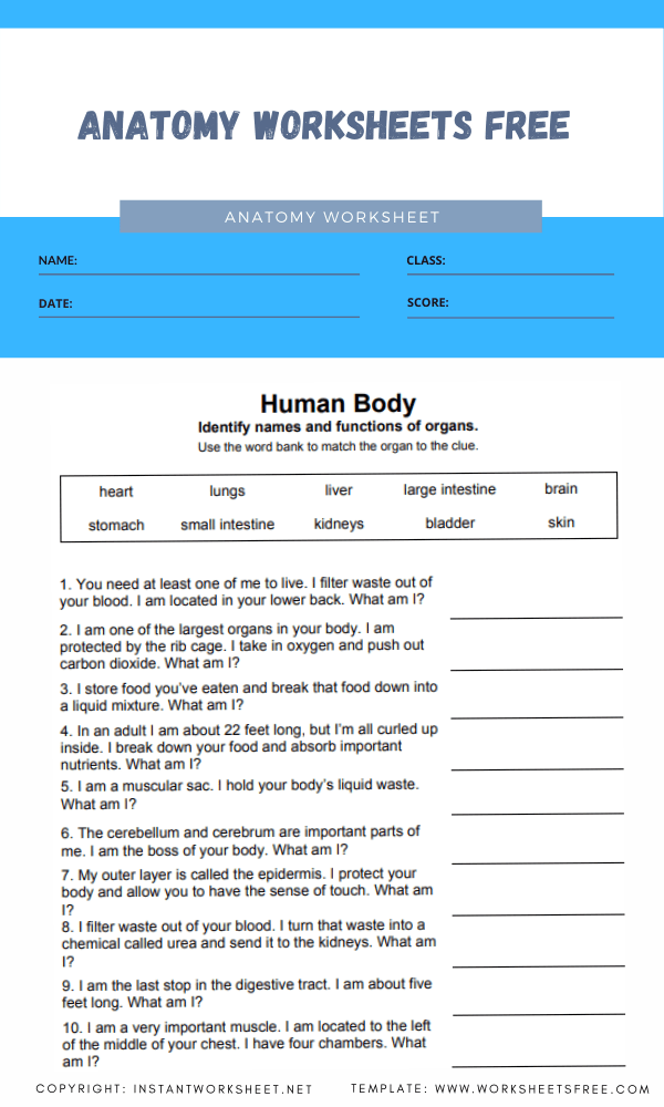 anatomy worksheets free 2