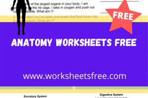 anatomy worksheets free