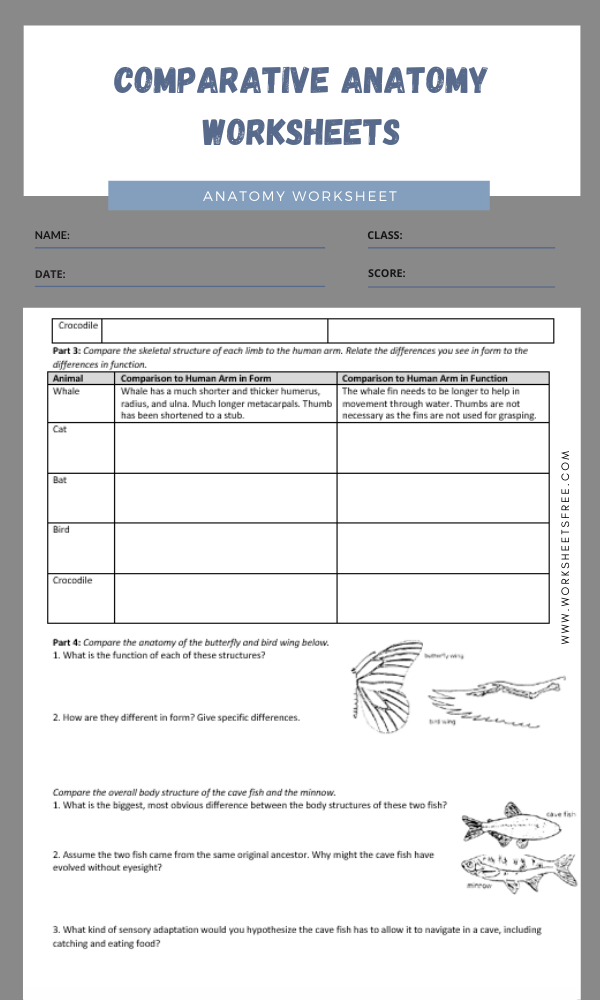 comparative anatomy worksheets 2