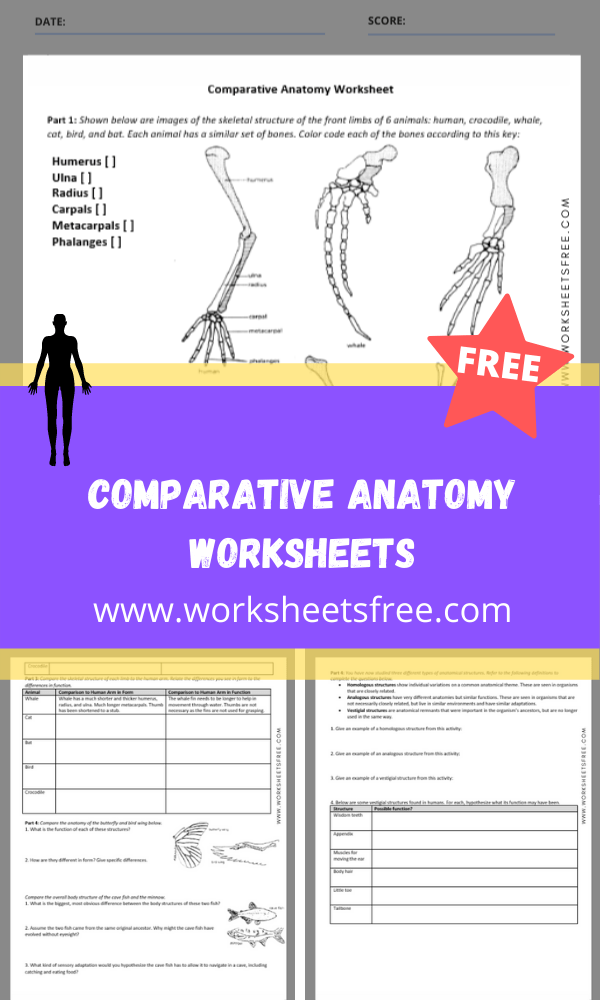 comparative anatomy worksheets