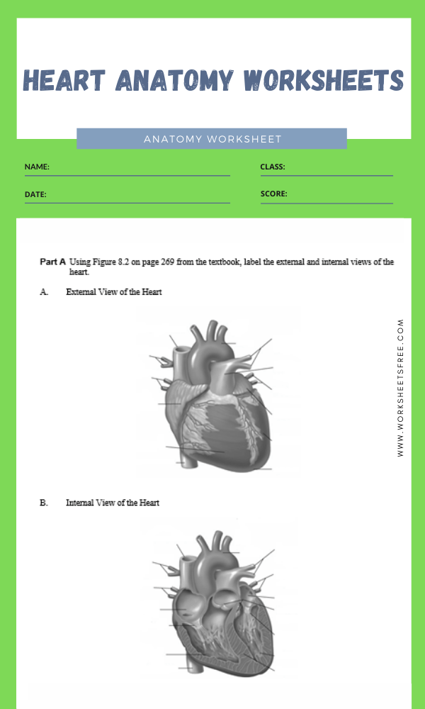 heart anatomy worksheets 1