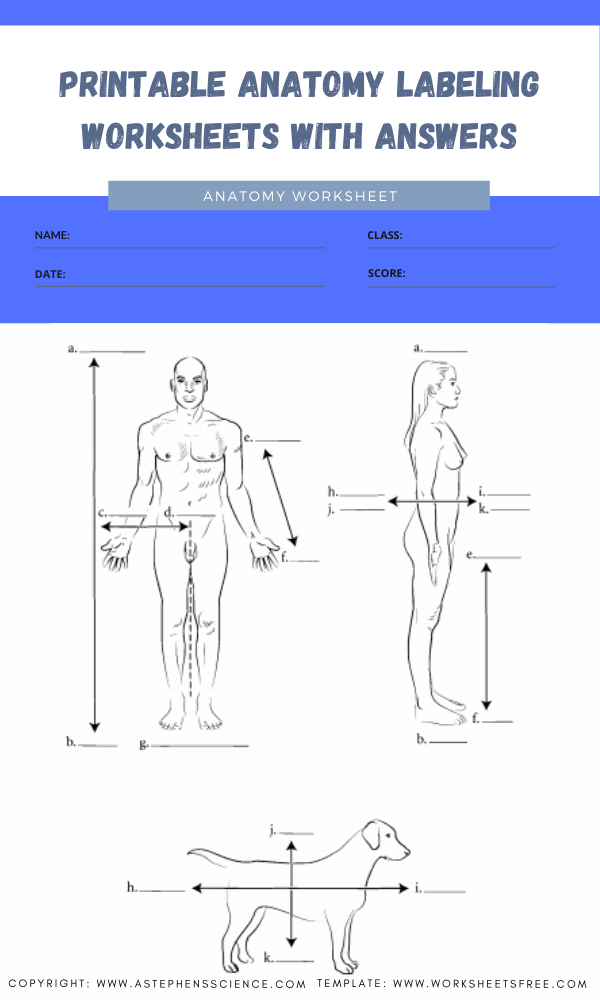 printable anatomy labeling worksheets with answers 1