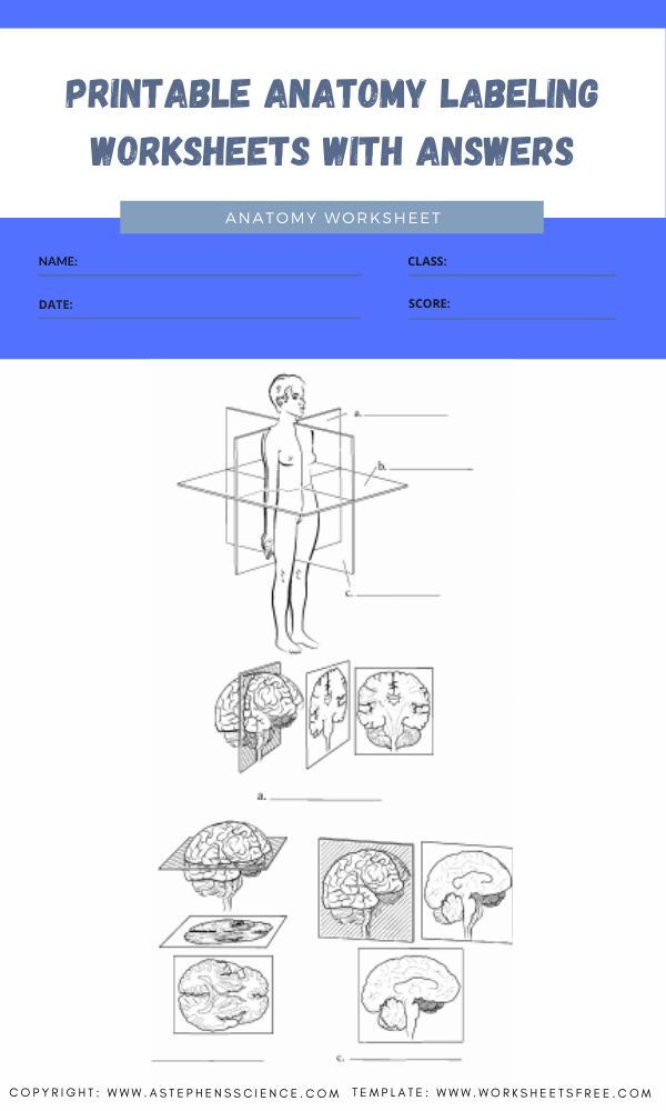 printable anatomy labeling worksheets with answers 2