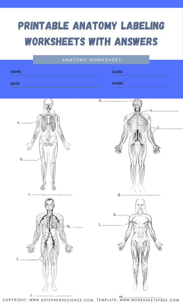 printable anatomy labeling worksheets with answers 5