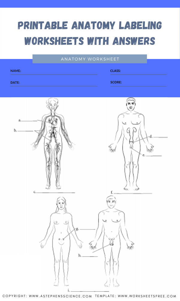printable anatomy labeling worksheets with answers 6