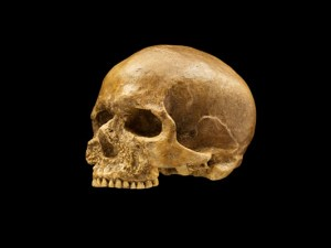 Cro-Magnon Skull. Photo:Smithsonian Institute