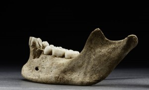 'Jane's mandible shows a series of sharp cuts, aiming to remove flesh. Image: Scott Whittaker, Smithsonian