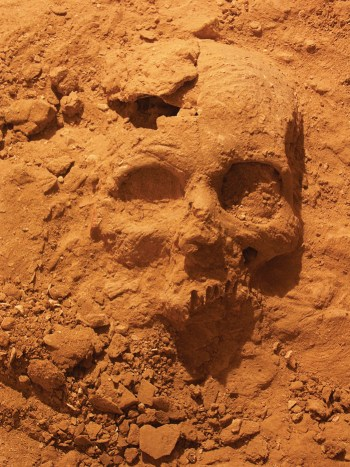 A skull embedded in hard sediment on the floor of KV 27