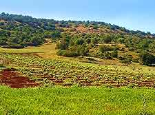 Green Mountains view
