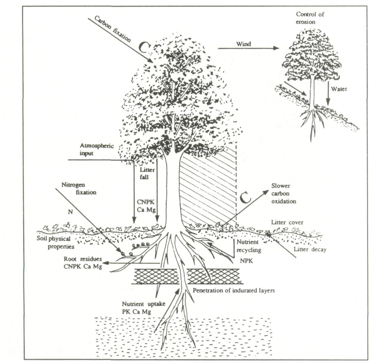 5 2 How Trees Improve Soils