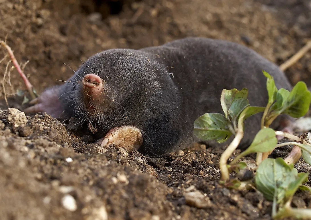 Animals That Live Underground