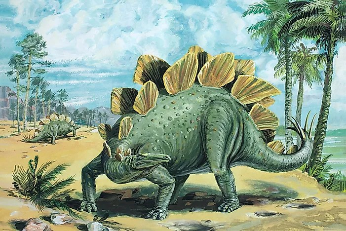 Stegosaurus Facts  Extinct Animals of the World   WorldAtlas com Stegosaurus Facts  Extinct Animals of the World