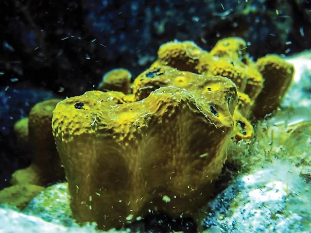 #2 Sponge – 580 million years old