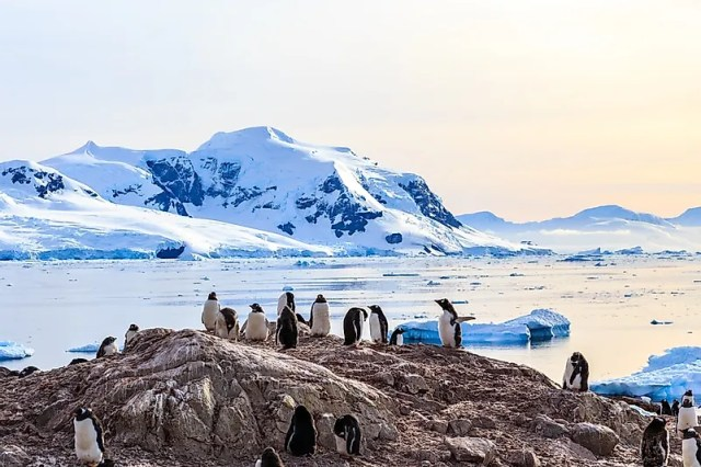 #2 Antarctic Penguins