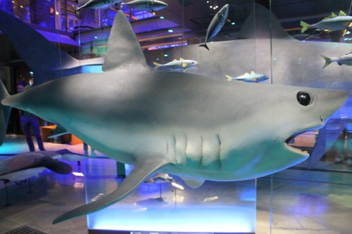 A shark in the Great Gallery of Evolution
