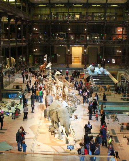 Zwierzęta z Arki Noego w Muzeum Historii Naturalnej