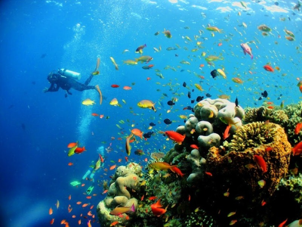 Coral Garden is beautiful beyond measure! (Source: http://tourmagz.com/pulau-sipadan-sabah/)