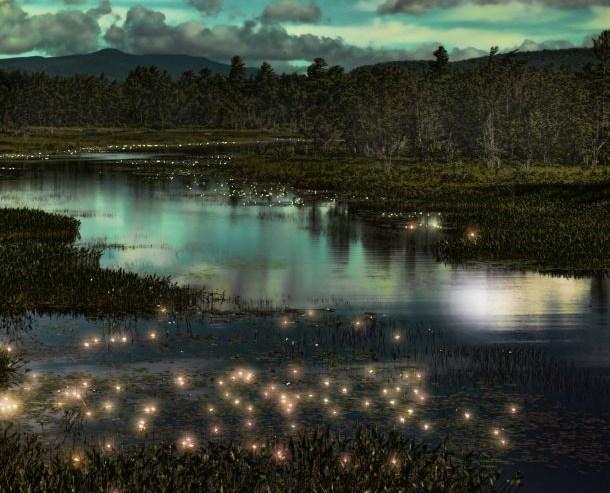Kuala-Selangor-Firefly-Park