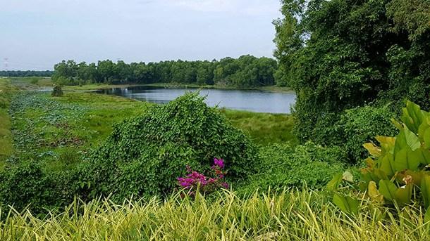 Paya Indah Wetland