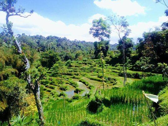 Tetebatu Lombok