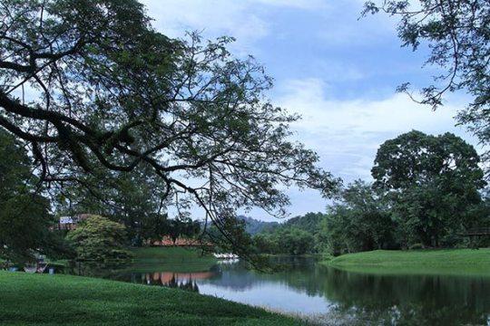 Taiping Lake Gardens Image
