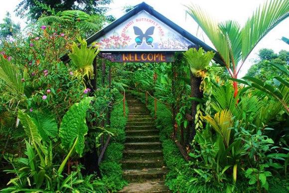 Kipandi Butterfly Park Kota Kinabalu