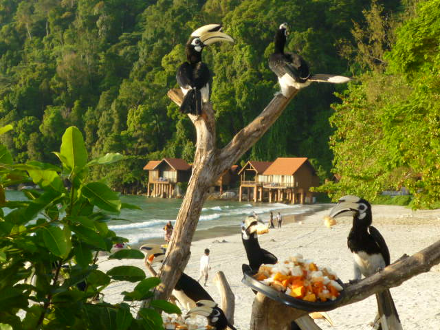 Image: Hornbills rule the island