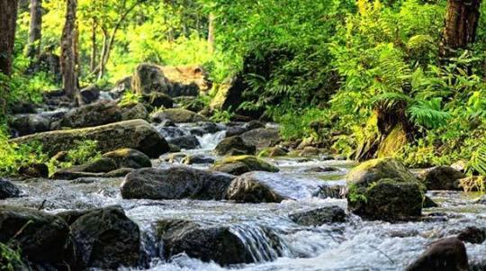 Hutan Lipur Rekreasi Tupah - Main Image