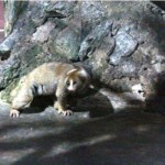 melaka-zoo-night-safari-01
