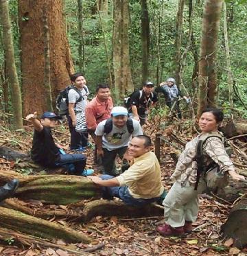 Frog Kubah TROPICAL FOREST