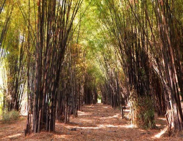 Hutan Bambu dan Taman Sakura