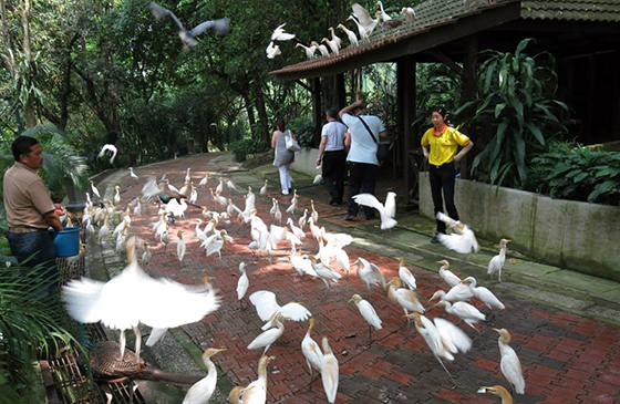 kids-travels-kl-bird-park